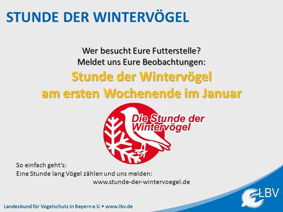 Landesbund für Vogelschutz in Bayern e.V. www.lbv.de Wer besucht Eure Futterstelle.