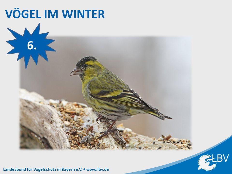 Landesbund für Vogelschutz in Bayern e.V. www.lbv.de 6.