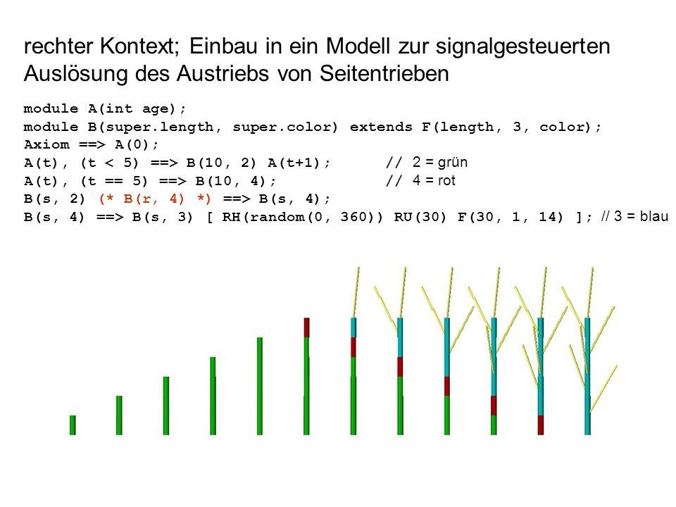 rechter Kontext; Einbau in ein Modell zur signalgesteuerten Auslösung des Austriebs von Seitentrieben module A(int age); module B(super.length, super.color) extends F(length, 3, color); Axiom ==> A(0); A(t), (t B(10, 2) A(t+1); // 2 = grün A(t), (t == 5) ==> B(10, 4); // 4 = rot B(s, 2) (* B(r, 4) *) ==> B(s, 4); B(s, 4) ==> B(s, 3) [ RH(random(0, 360)) RU(30) F(30, 1, 14) ]; // 3 = blau