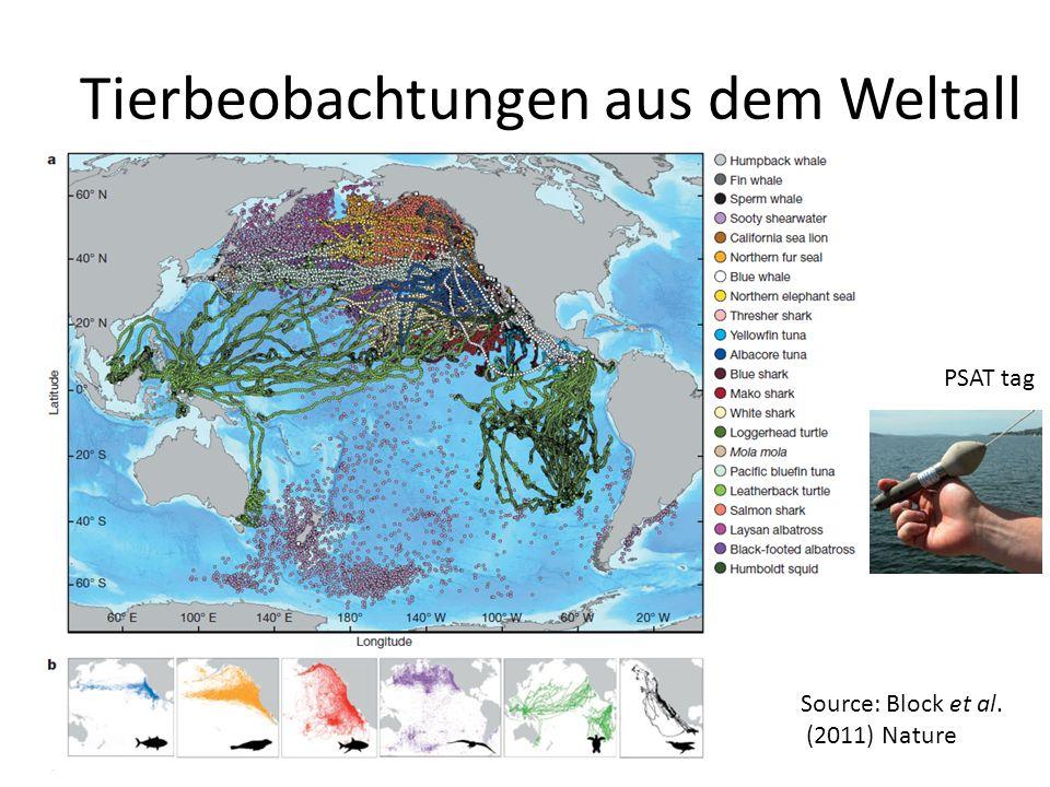 Tierbeobachtungen aus dem Weltall PSAT tag Source: Block et al. (2011) Nature