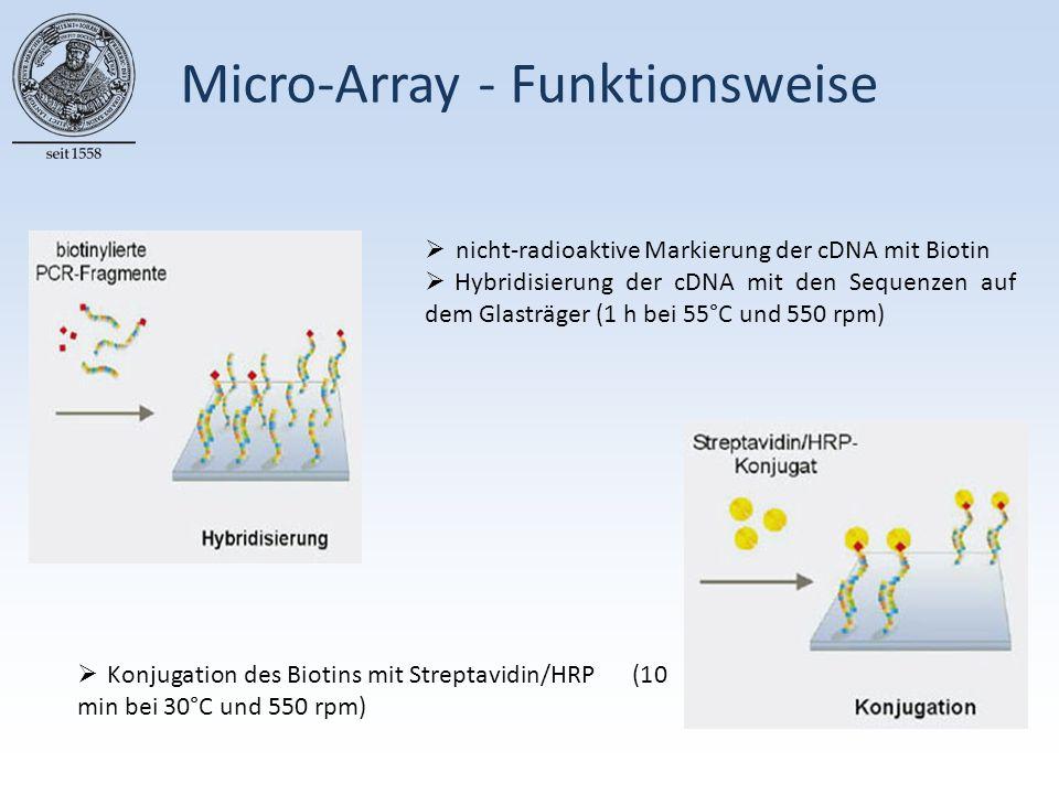 Micro-Array - Funktionsweise  nicht-radioaktive Markierung der cDNA mit Biotin  Hybridisierung der cDNA mit den Sequenzen auf dem Glasträger (1 h bei 55°C und 550 rpm)  Konjugation des Biotins mit Streptavidin/HRP (10 min bei 30°C und 550 rpm)