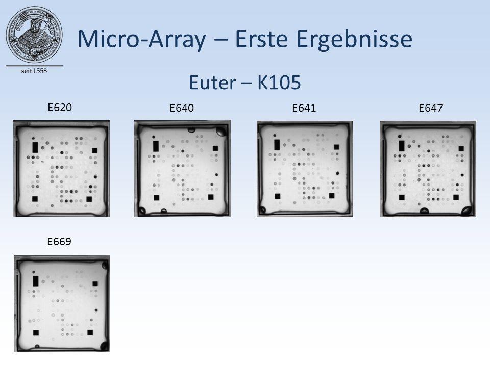 Micro-Array – Erste Ergebnisse E620 E640E641E647 E669 Euter – K105