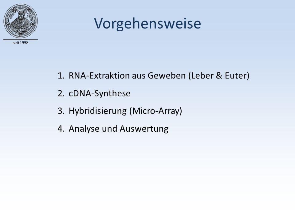 Vorgehensweise 1.RNA-Extraktion aus Geweben (Leber & Euter) 2.cDNA-Synthese 3.Hybridisierung (Micro-Array) 4.Analyse und Auswertung