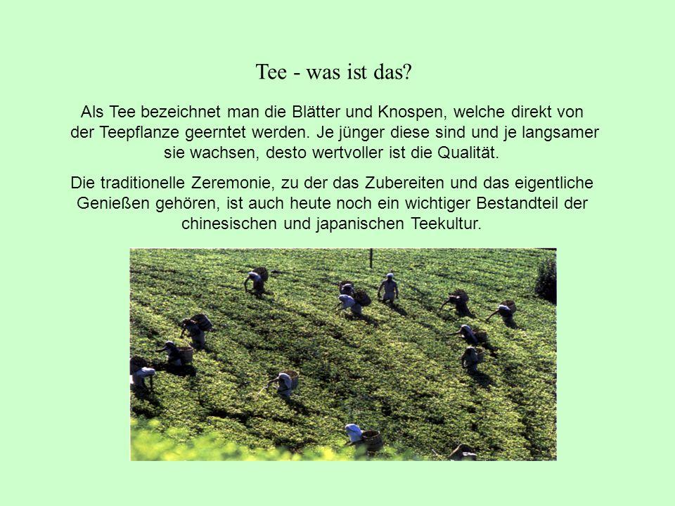 Als Tee bezeichnet man die Blätter und Knospen, welche direkt von der Teepflanze geerntet werden.