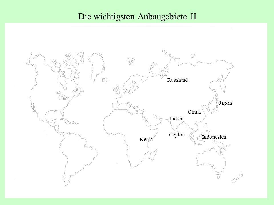 Die wichtigsten Anbaugebiete II Kenia Indien Japan Russland China Indonesien Ceylon
