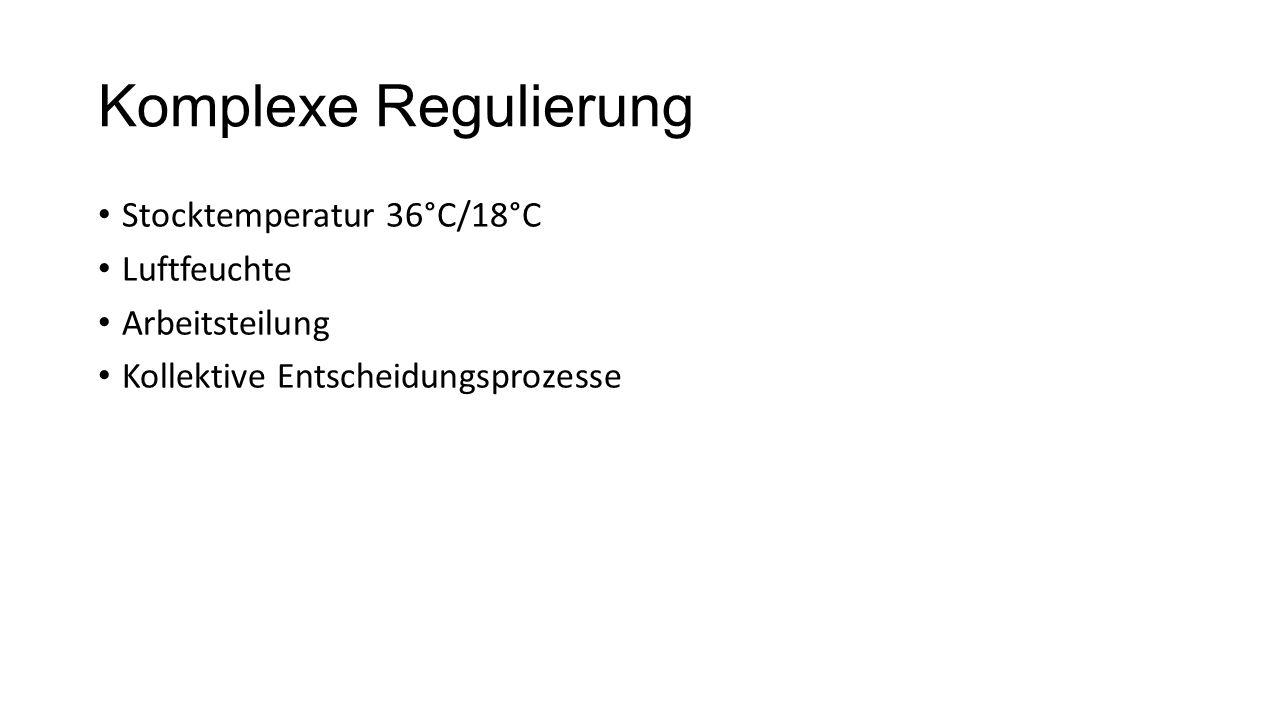 Komplexe Regulierung Stocktemperatur 36°C/18°C Luftfeuchte Arbeitsteilung Kollektive Entscheidungsprozesse