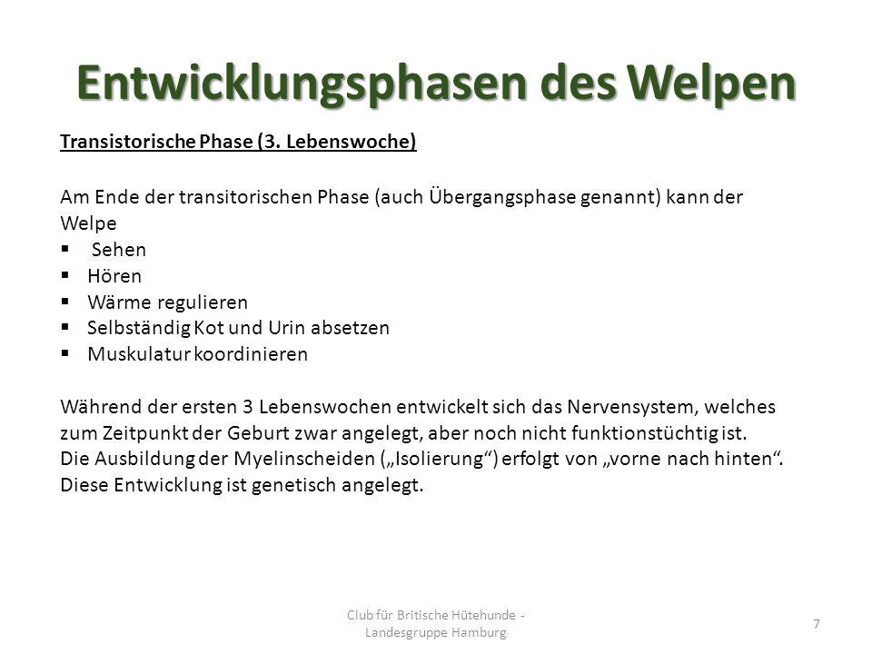 Entwicklungsphasen des Welpen Transistorische Phase (3.
