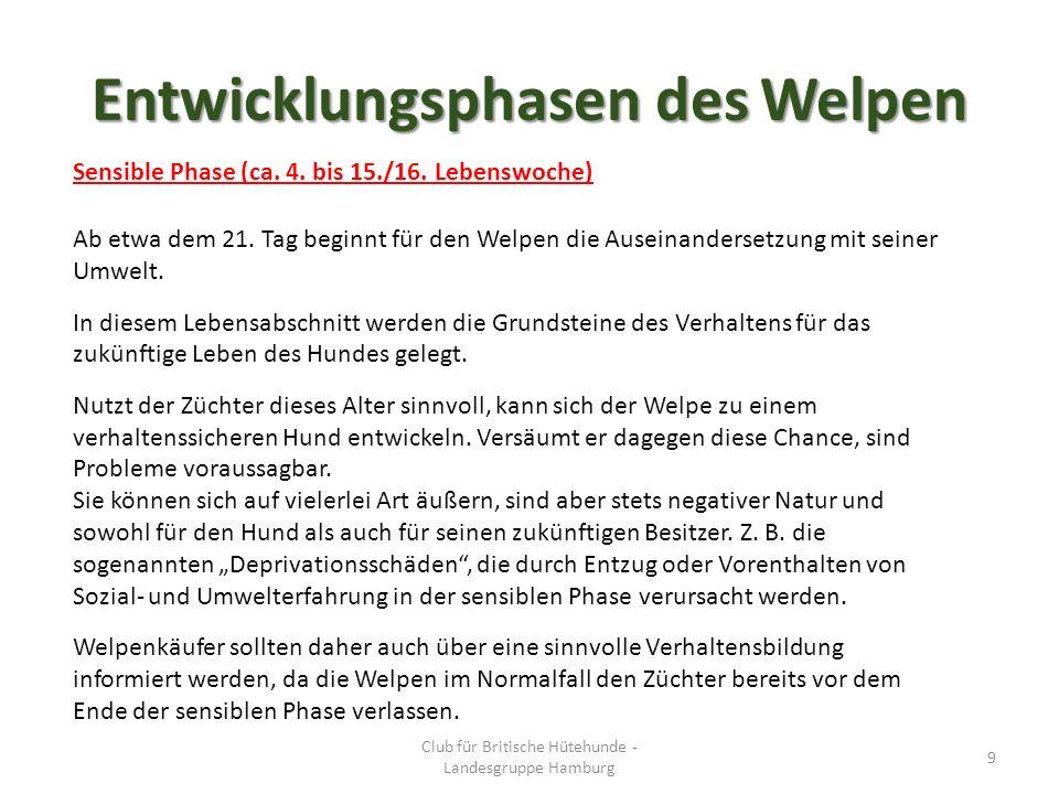 Entwicklungsphasen des Welpen Sensible Phase (ca. 4.