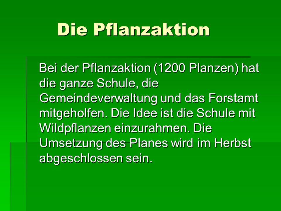 Die Pflanzaktion Die Pflanzaktion Bei der Pflanzaktion (1200 Planzen) hat die ganze Schule, die Gemeindeverwaltung und das Forstamt mitgeholfen.