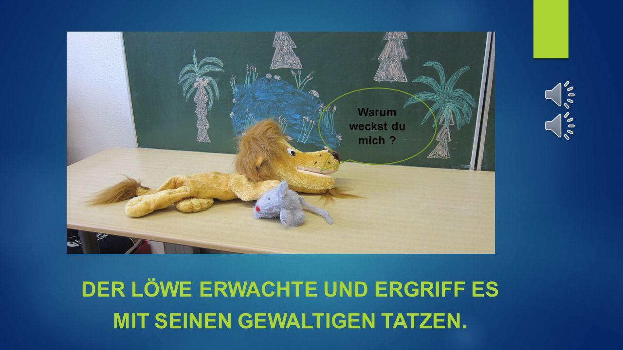 Ein Mäuschen lief über ein schlafenden Löwen Zzzzz zzzzz Hoffentlich wacht er nicht auf.