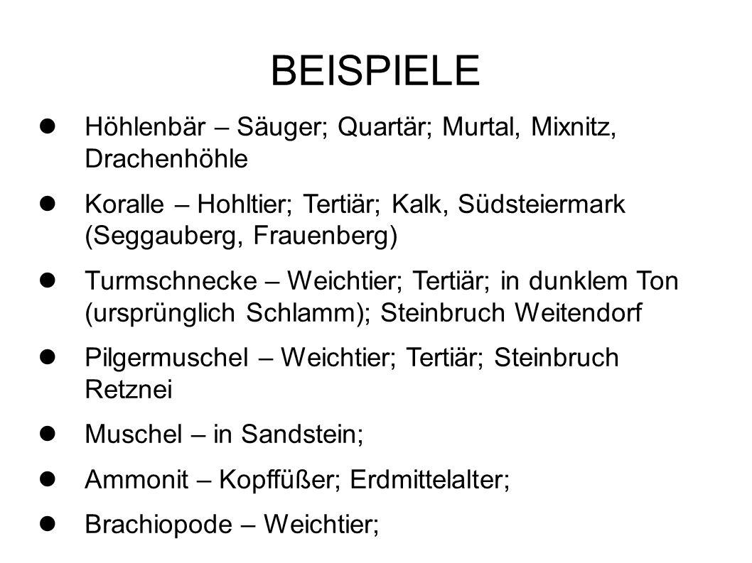 BEISPIELE Höhlenbär – Säuger; Quartär; Murtal, Mixnitz, Drachenhöhle Koralle – Hohltier; Tertiär; Kalk, Südsteiermark (Seggauberg, Frauenberg) Turmsch