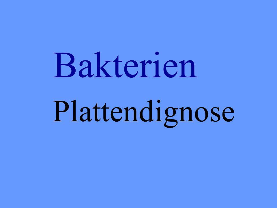 Bakterien Plattendignose