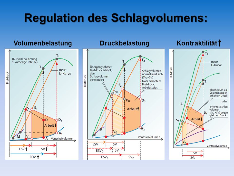 Regulation des Schlagvolumens: VolumenbelastungDruckbelastungKontraktilität