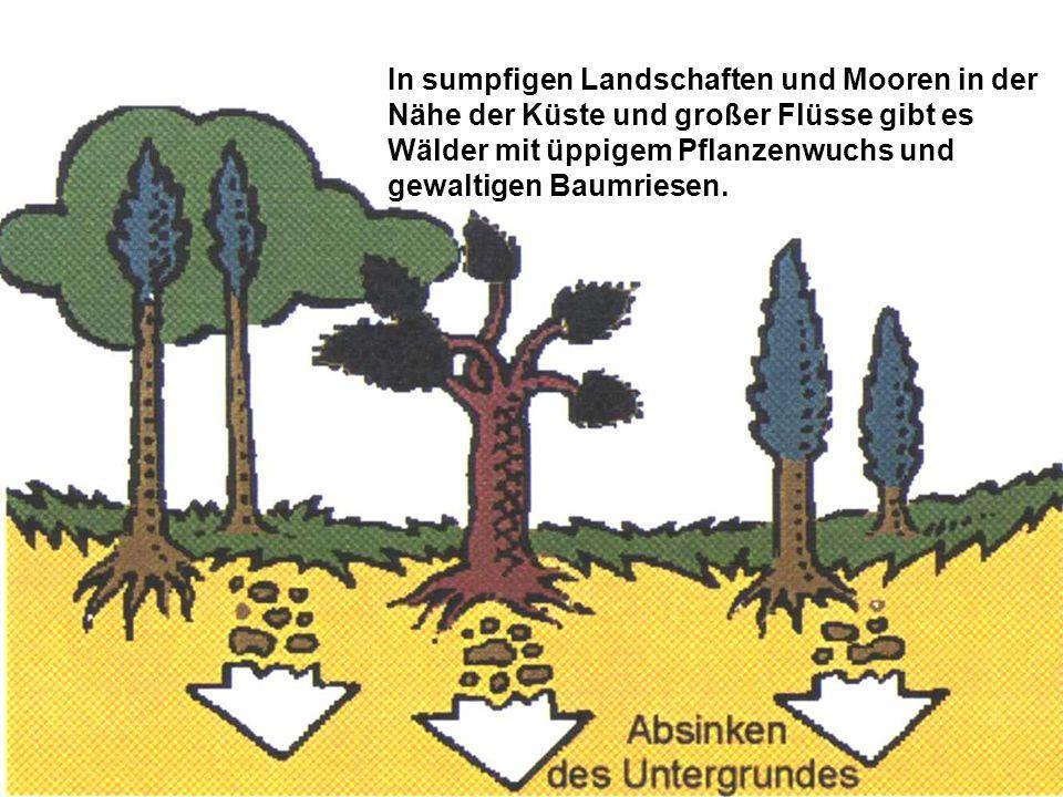 Alte Bäume stürzen um, fallen in das sauerstoffarme Sumpfwasser und werden gemeinsam mit anderen Pflanzen im Schlamm begraben.