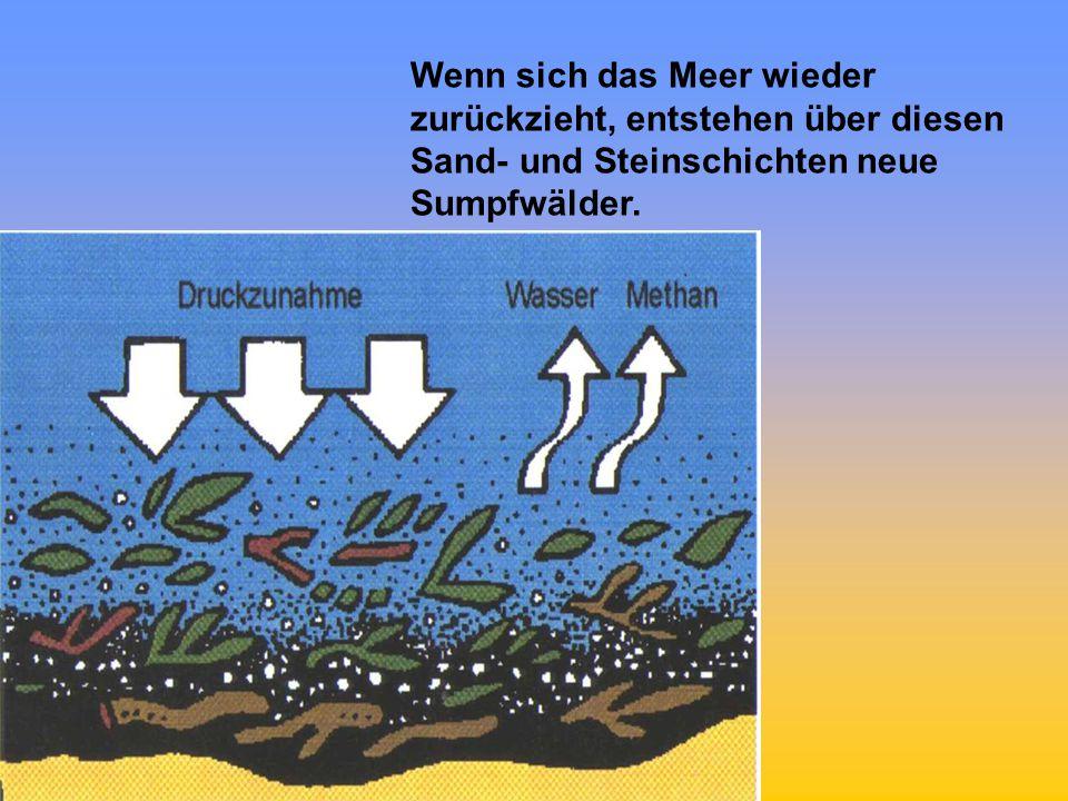 Im Laufe der Jahrmillionen lagern sich immer mehr solcher Schichten aus toten Pflanzen, Schlamm, Sand und Steinen ab.