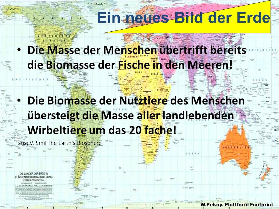 Die Masse der Menschen übertrifft bereits die Biomasse der Fische in den Meeren.