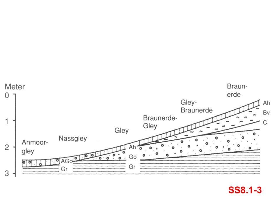 SS8.1-3