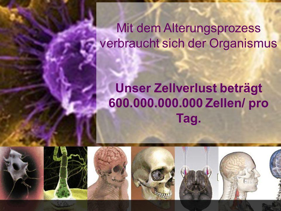 Stammzellen entwickeln sich zu Herzmuskelfasern Stammzellen sind fähig, jede Gewebezelle zu bilden, d.h.