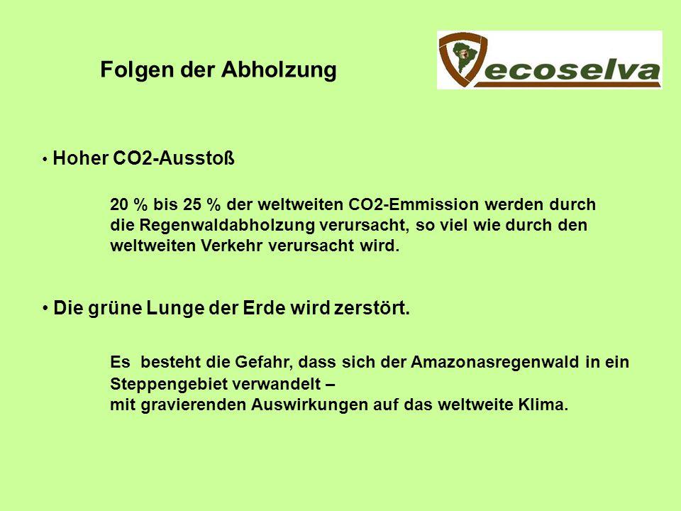 Regenwald und CO2 Ein Hektar Primärregenwald speichert ca.