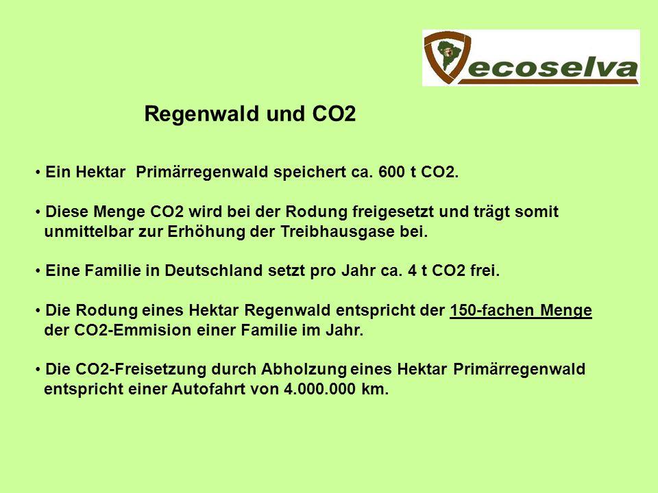 Regenwald und CO2 Ein Hektar Primärregenwald speichert ca. 600 t CO2. Diese Menge CO2 wird bei der Rodung freigesetzt und trägt somit unmittelbar zur