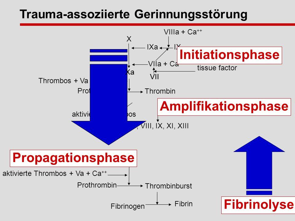 Xa Thrombos + Va + Ca ++ Prothrombin Thrombin VII tissue factor aktivierte Thrombos V, VIII, IX, XI, XIII Fibrin Fibrinogen Xa aktivierte Thrombos + Va + Ca ++ Prothrombin Thrombinburst Amplifikationsphase Fibrinolyse Propagationsphase Trauma-assoziierte Gerinnungsstörung X Xa VIIIa + Ca ++ IX IXa VIIa + Ca ++ VII Initiationsphase