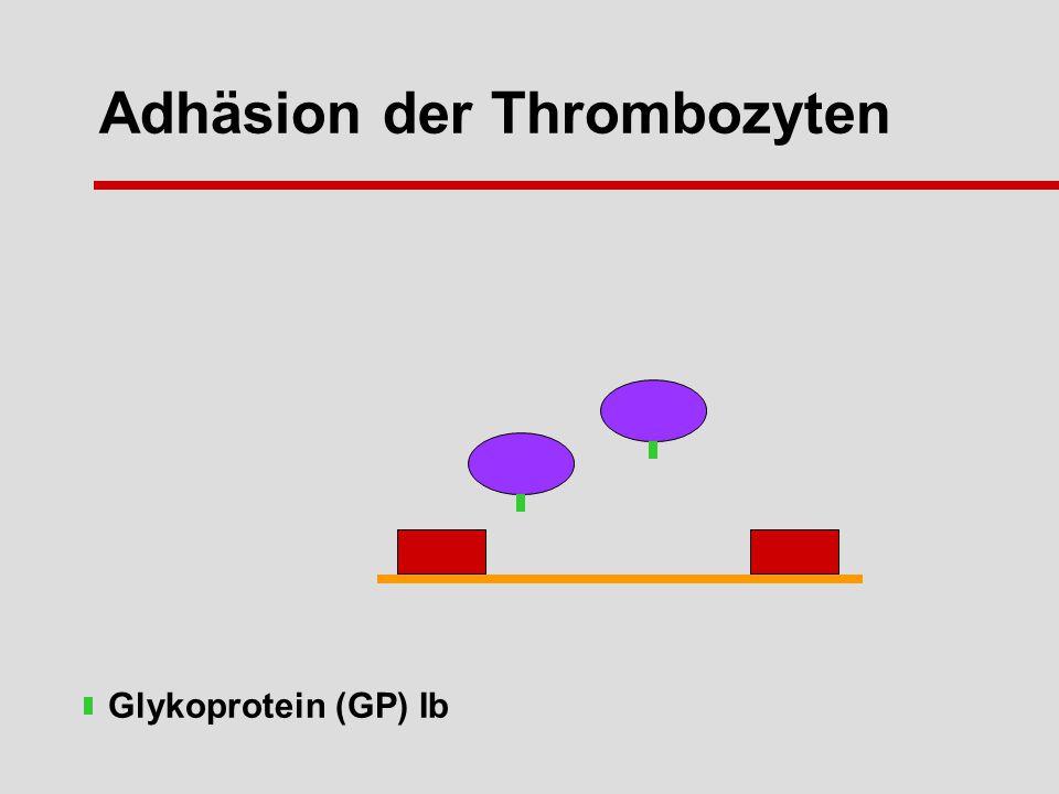 Adhäsion der Thrombozyten Glykoprotein (GP) Ib