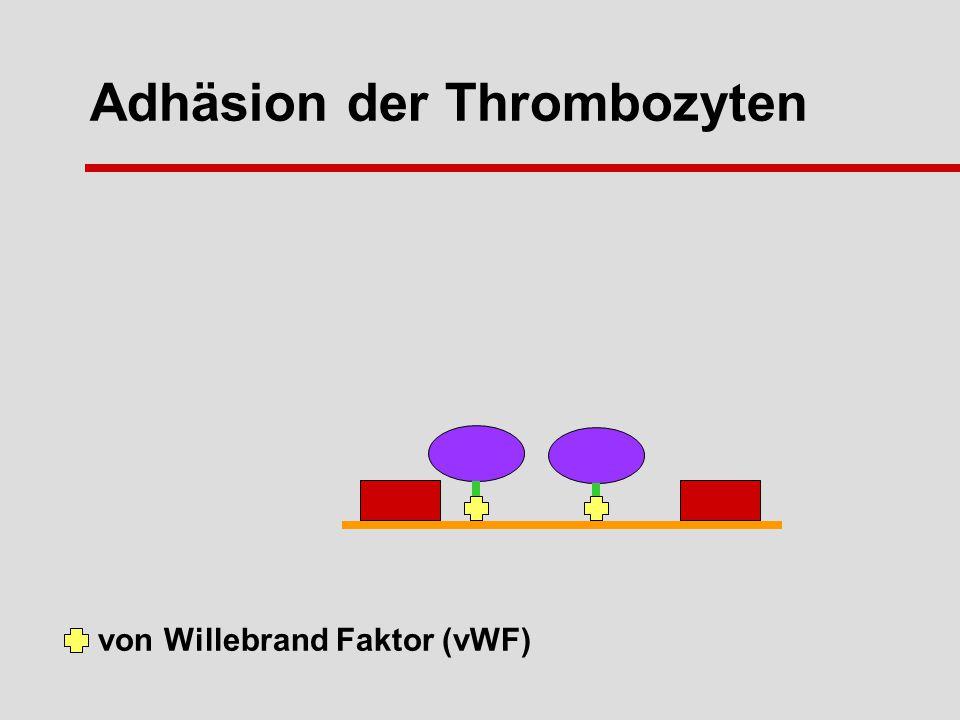 Adhäsion der Thrombozyten von Willebrand Faktor (vWF)
