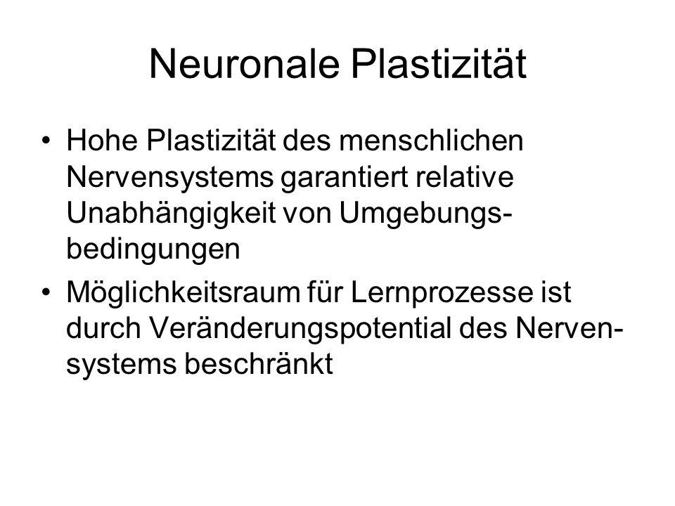 Wo wird gelernt? Neuronale Grundlagen und Grenzen des Lernens Neuronale Plastizität Neuronales Netz Sensibilität für Invarianzen
