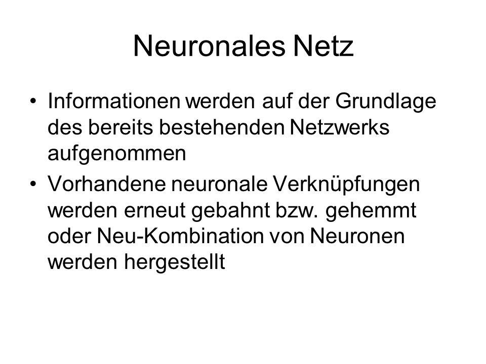 Neuronale Plastizität Hohe Plastizität des menschlichen Nervensystems garantiert relative Unabhängigkeit von Umgebungs- bedingungen Möglichkeitsraum f