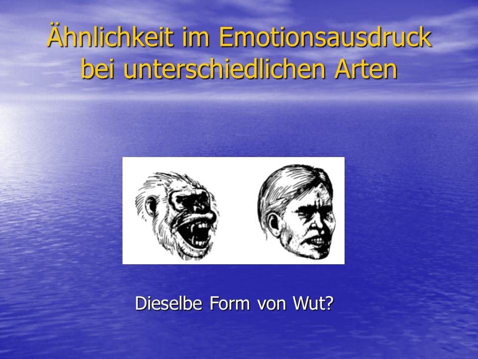 Ähnlichkeit im Emotionsausdruck bei unterschiedlichen Arten Dieselbe Form von Wut?