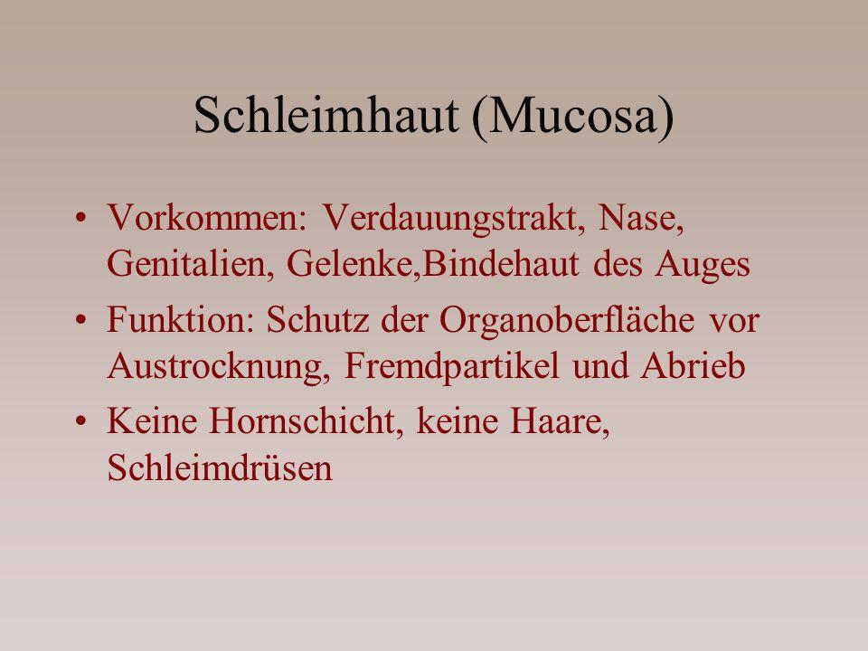 Schleimhaut (Mucosa) Vorkommen: Verdauungstrakt, Nase, Genitalien, Gelenke,Bindehaut des Auges Funktion: Schutz der Organoberfläche vor Austrocknung,