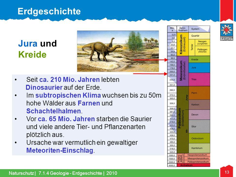 Naturschutz   13 Jura und Kreide •Seit ca. 210 Mio. Jahren lebten Dinosaurier auf der Erde. •Im subtropischen Klima wuchsen bis zu 50m hohe Wälder aus