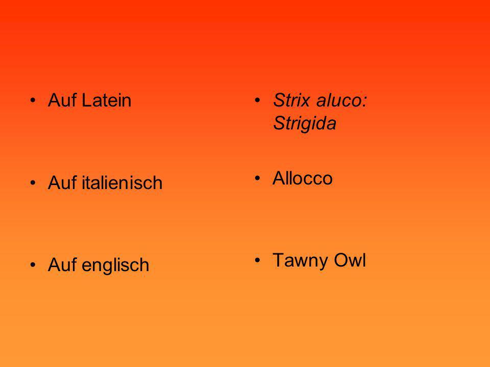 •Auf Latein •Auf italienisch •Auf englisch •Strix aluco: Strigida •Allocco •Tawny Owl