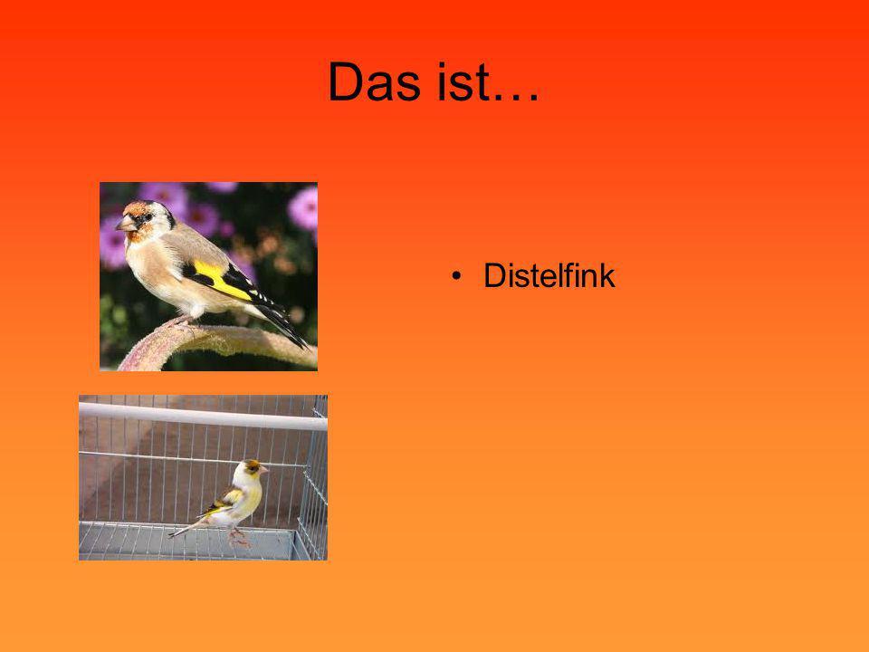 Das ist… •Distelfink