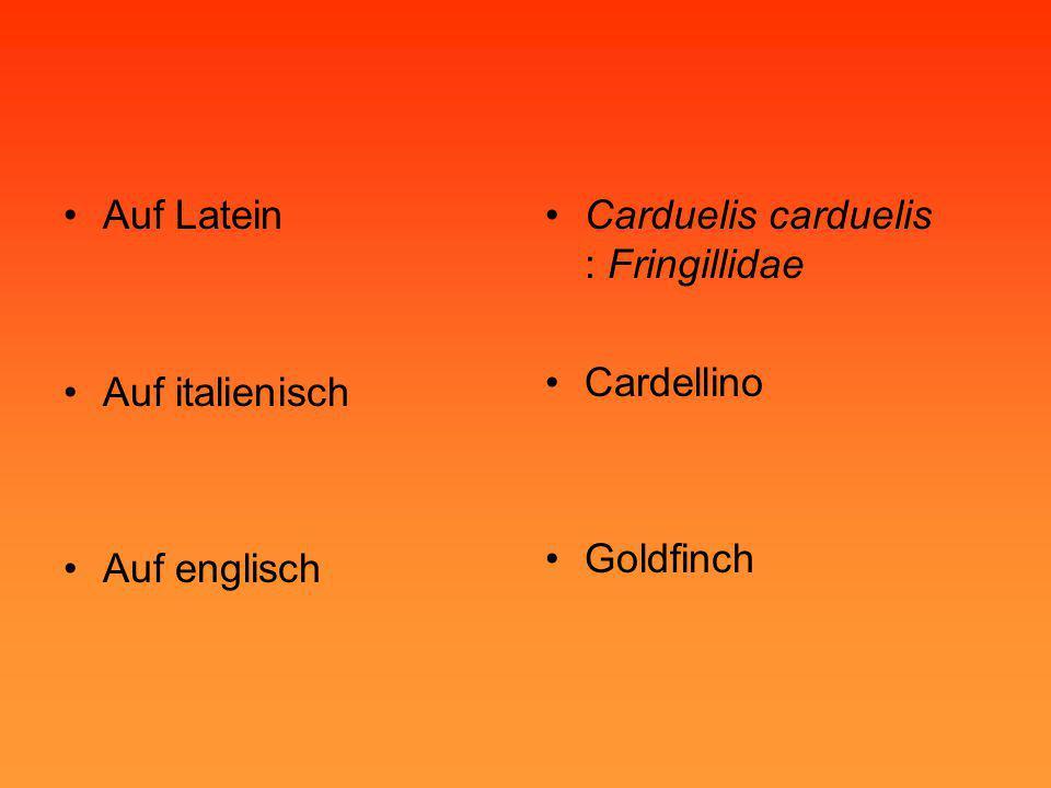•Auf Latein •Auf italienisch •Auf englisch •Carduelis carduelis : Fringillidae •Cardellino •Goldfinch