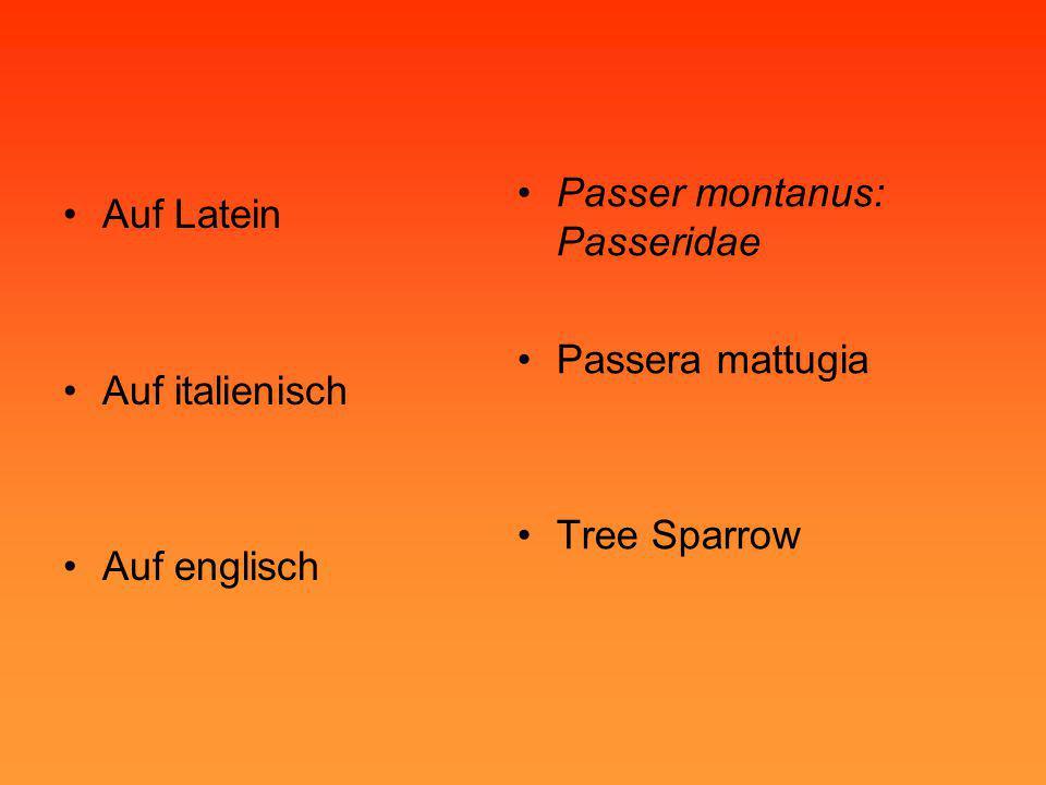 •Auf Latein •Auf italienisch •Auf englisch •Passer montanus: Passeridae •Passera mattugia •Tree Sparrow