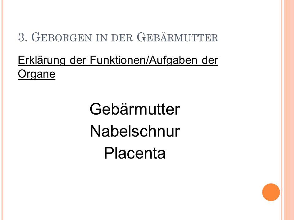 3. G EBORGEN IN DER G EBÄRMUTTER Erklärung der Funktionen/Aufgaben der Organe Gebärmutter Nabelschnur Placenta