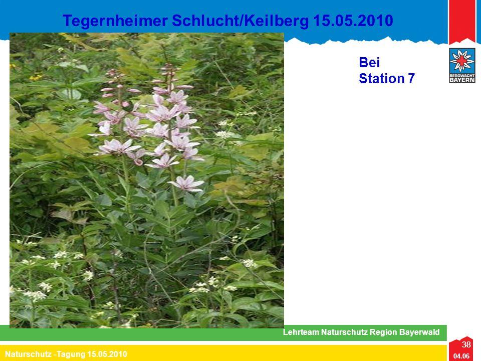 38 04.06 Naturschutz -Tagung 15.05.2010 Lehrteam Naturschutz Region Bayerwald Tegernheimer Schlucht/Keilberg 15.05.2010 38 Bei Station 7