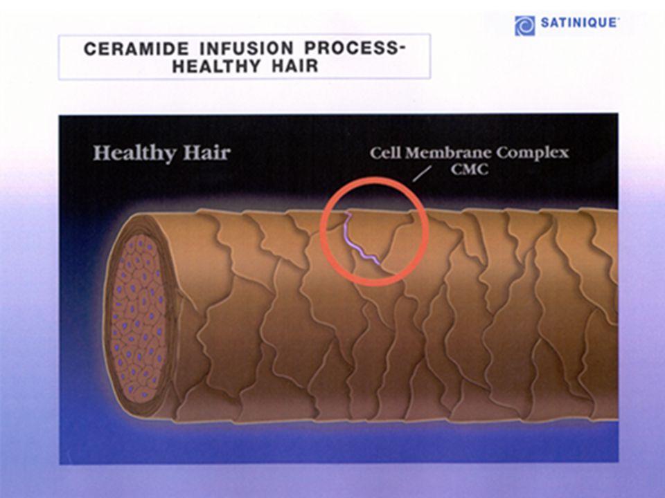 • Intensiv Reparierende Kur – behandelt Strukturschäden und Spliss • Lipid-Schutz-Spray – schützt vor Fönhitze und Feuchtigkeitsverlust • Glanz Serum – für chemisch behandeltes Haar, schützt, spendet Feuchtigkeit, verleiht Glanz P F L E G E