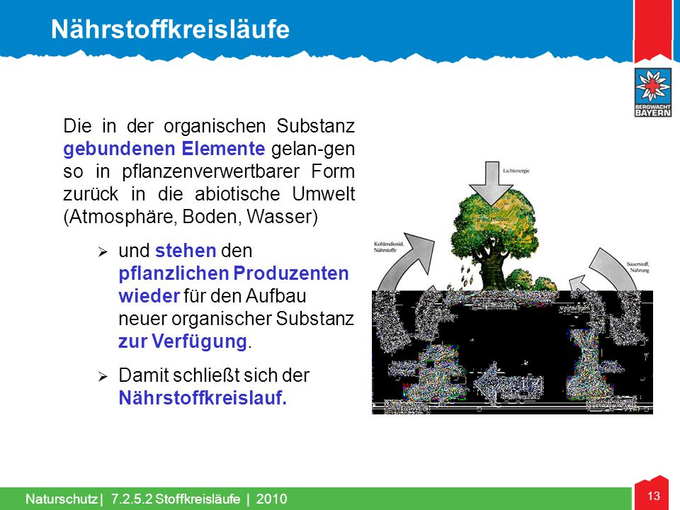 13 Naturschutz | Die in der organischen Substanz gebundenen Elemente gelan-gen so in pflanzenverwertbarer Form zurück in die abiotische Umwelt (Atmosp
