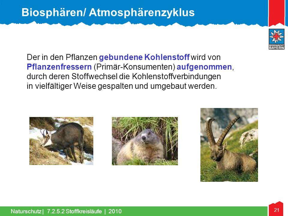 21 Naturschutz | Der in den Pflanzen gebundene Kohlenstoff wird von Pflanzenfressern (Primär-Konsumenten) aufgenommen, durch deren Stoffwechsel die Ko