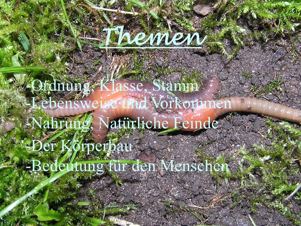 Ordnung -Wenigborster Klasse -Gürtelwürmer Stamm -Ringelwürmer Was heißt das?
