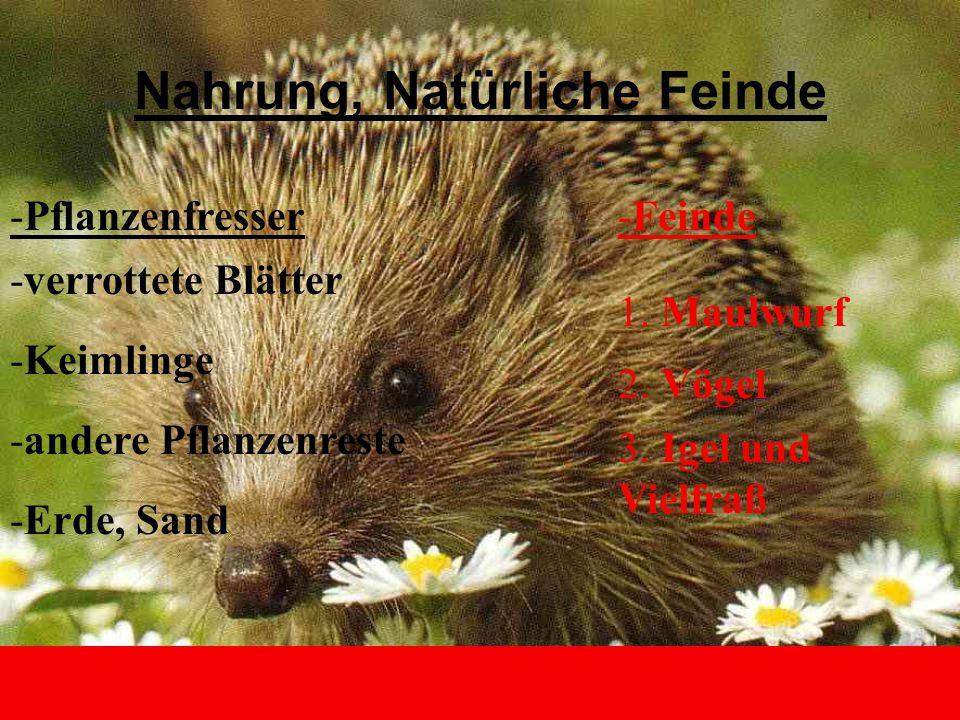 Nahrung, Natürliche Feinde -Pflanzenfresser -verrottete Blätter -Keimlinge -andere Pflanzenreste -Erde, Sand -Feinde 1. Maulwurf 2. Vögel 3. Igel und
