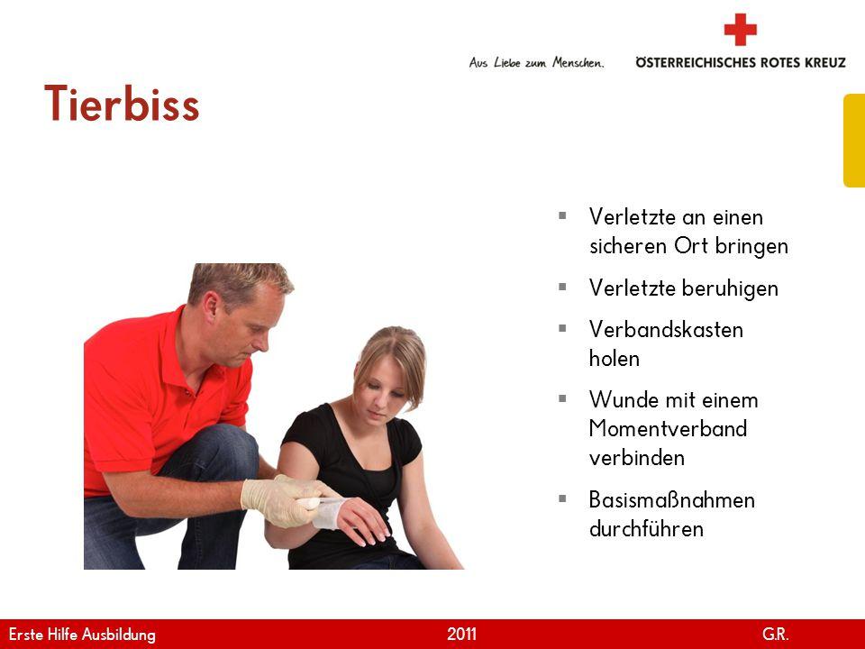 www.roteskreuz.at Version April | 2011 Tierbiss 48  Verletzte an einen sicheren Ort bringen  Verletzte beruhigen  Verbandskasten holen  Wunde mit