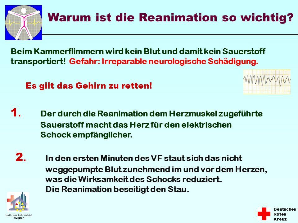 Deutsches Rotes Kreuz Rotkreuz-Lehrinstitut Münster Warum ist die Reanimation so wichtig? Beim Kammerflimmern wird kein Blut und damit kein Sauerstoff