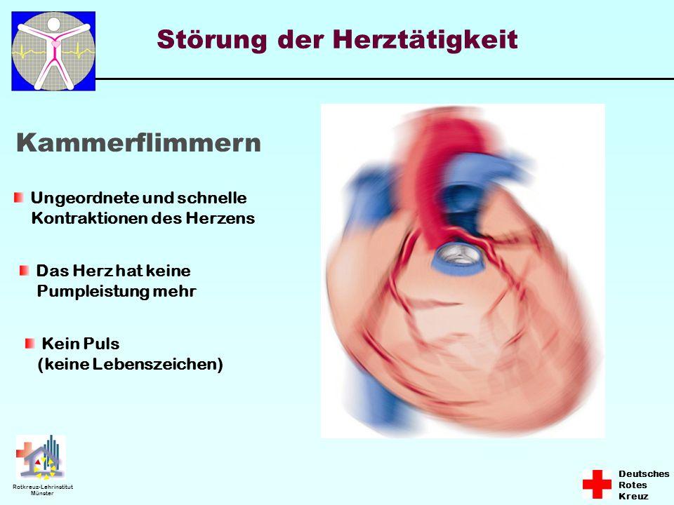 Deutsches Rotes Kreuz Rotkreuz-Lehrinstitut Münster Störung der Herztätigkeit Kammerflimmern Ungeordnete und schnelle Kontraktionen des Herzens Das He