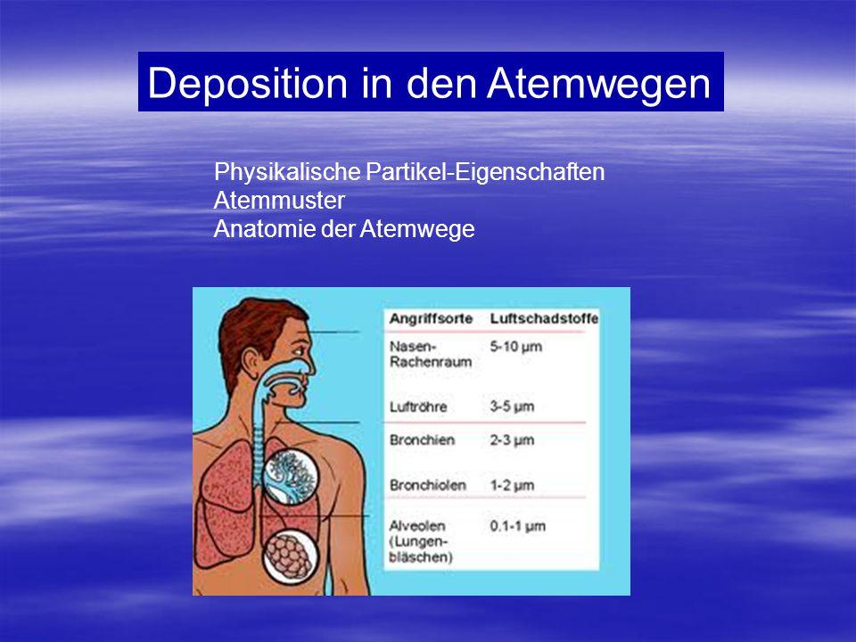 Deposition in den Atemwegen Physikalische Partikel-Eigenschaften Atemmuster Anatomie der Atemwege