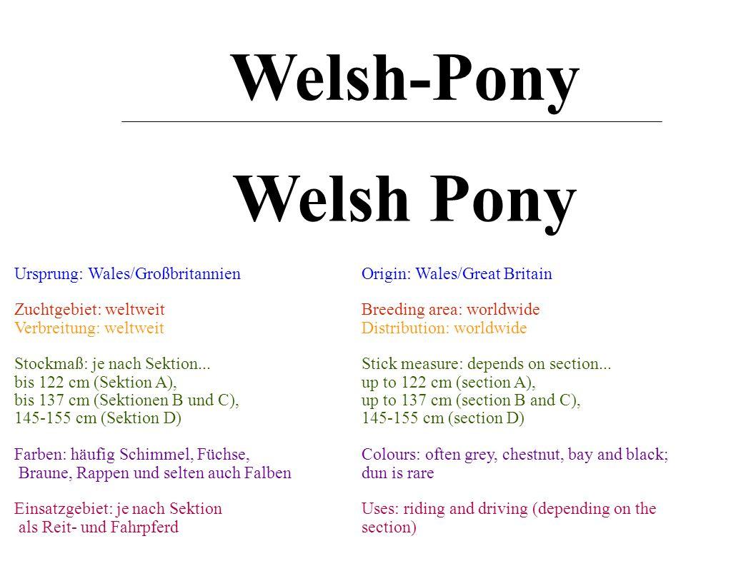 Welsh Pony Welsh-Pony Ursprung: Wales/Großbritannien Zuchtgebiet: weltweit Verbreitung: weltweit Stockmaß: je nach Sektion...