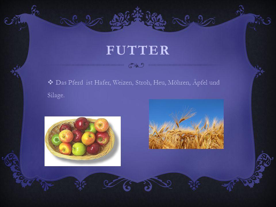 FUTTER  Das Pferd ist Hafer, Weizen, Stroh, Heu, Möhren, Äpfel und Silage.