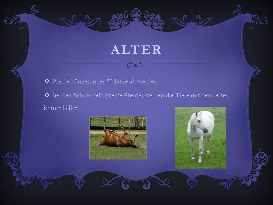 ALTER  Pferde können über 30 Jahre alt werden.  Bei den Schimmeln (weiße Pferde) werden die Tiere mit dem Alter immer heller.